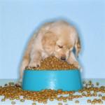 Dog Food!